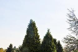 Lebensbäume...