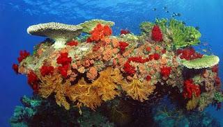 Alam Laut