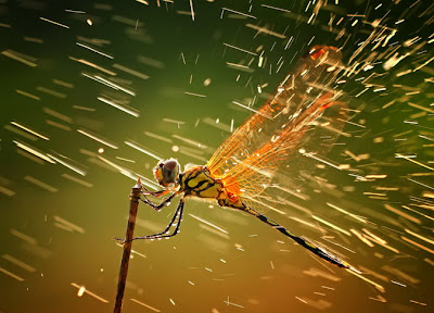 15 Foto Pemenang National Geographic Photo Contest 2011