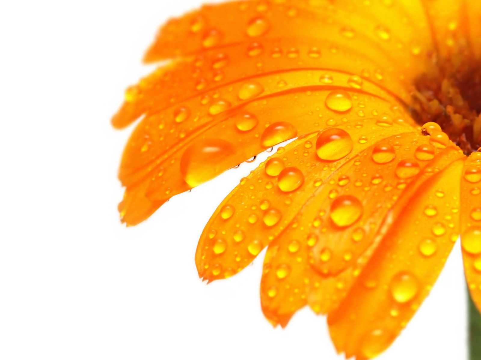 http://4.bp.blogspot.com/-YWv0Kvk8Exw/TWdunLdnNEI/AAAAAAAADew/r9jiYXXvrn8/s1600/Oranje-achtergronden-oranje-wallpapers-oranje-wallpaper-hd-27.jpg