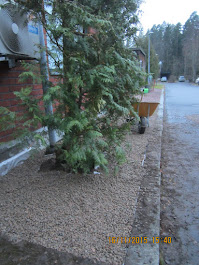 Pihatyö pihatyöt pihapuiden kaadot pensaiden alasleikkaukset Talonmiespalvelu Tampere Pirkanmaa