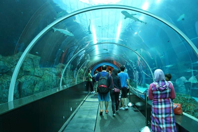 """Singapore, The island of Sentosa, is the largest ocean aquarium modernity with a name SEA Aquarium. Included in this giant aquarium park complex """"Marine life""""."""