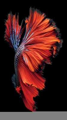 iphone 6s Wallpaper fish