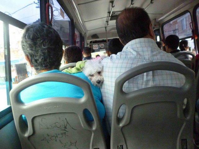 Adopción de gatos y perros en Medellín