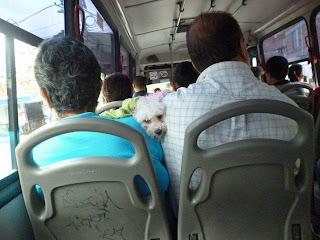 Perro en Bus