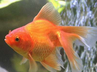 Viewers Are Goldfish  TV Tropes