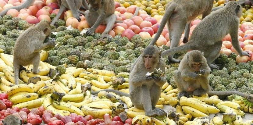 Monkey Buffet Festival