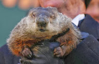 Same old Groundhog Day; Phil predicts more winter - VIDEO