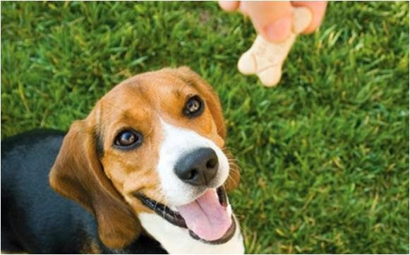 Giving Rewards to Your Dog