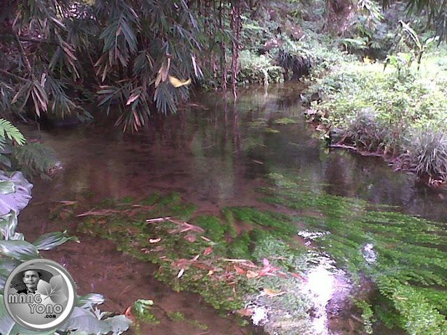Mata air cimutan kmp cikanyere curugrendeng - Foto Thie Mom'y Daf'a, Facebooker Subang