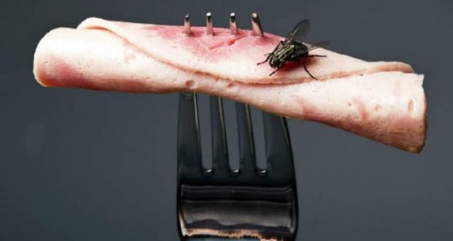 شاهد ما الذي يحدث عن وقوف الذباب على الطعام الذي تتناوله !! خطير جدااااااا