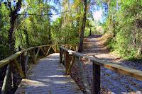 Detalle de un sendero en el Parque Natural de los Alcornocales, Genatur.