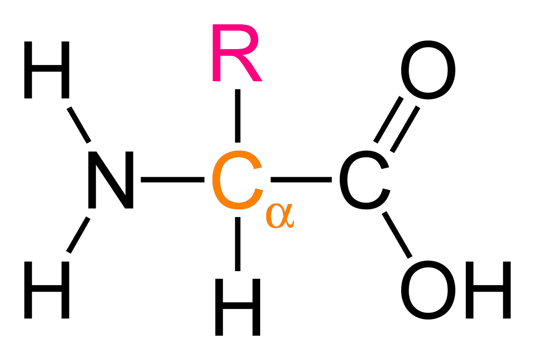 world of biochemistry blog about biochemistry amino