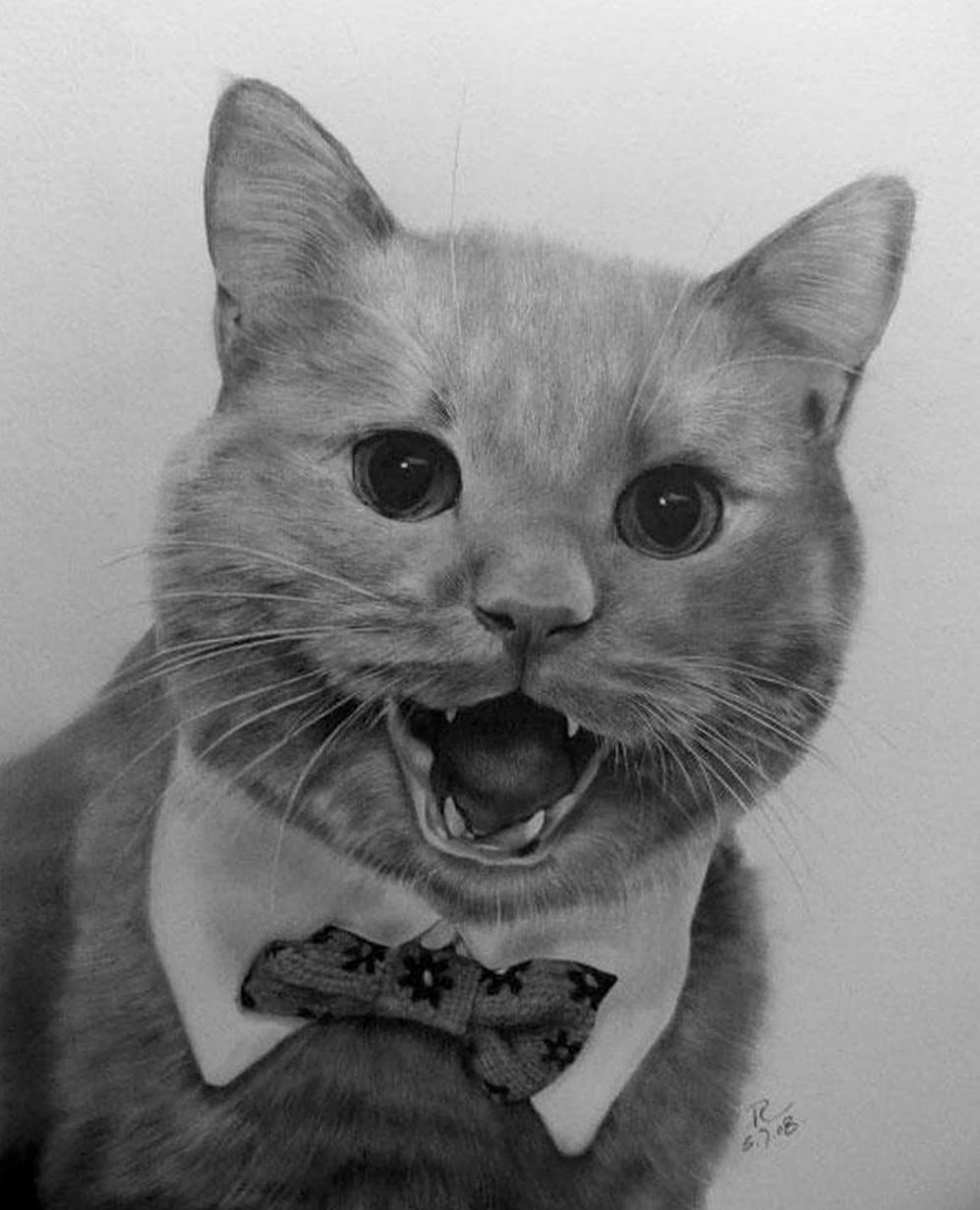 gatos-a-lapiz