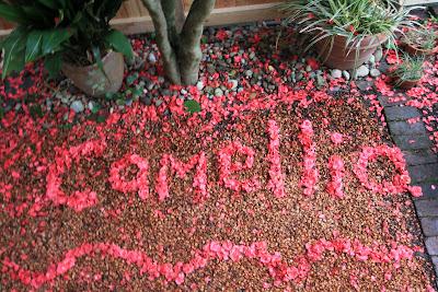 Camellia japonic Binomen Art