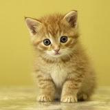 Cada vez que se publica un mal libro, en algún sitio muere un gatito.
