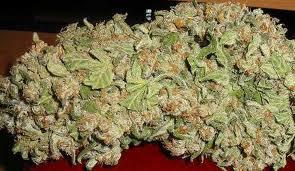 Ak48 Weed