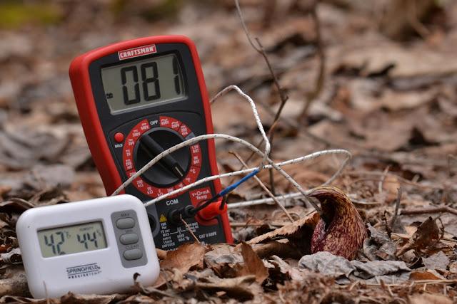 measuring skunk cabbage temperature