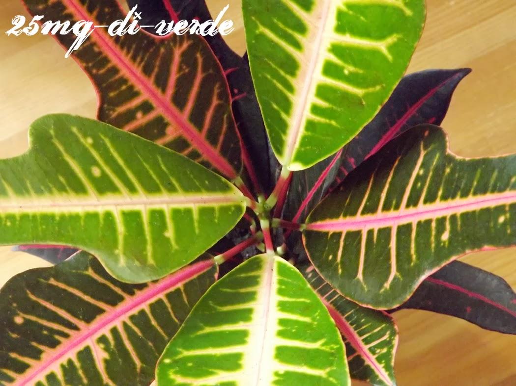 Home sweet home piante da appartamento 25mq di verde for Piante da interno piccole