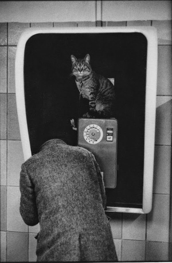 martine franck paris chats photos