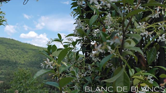 Jasmiinin tuoksua - www.blancdeblancs.fi