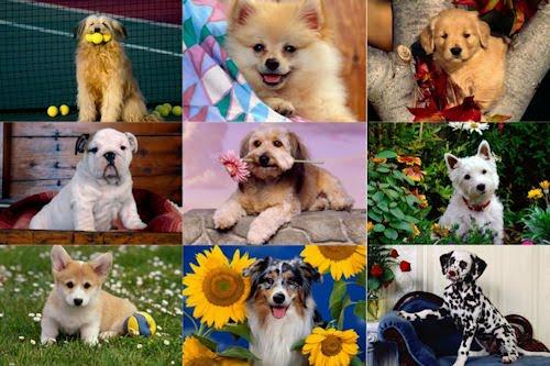 Wallpapers de perritos para pc, laptop y netbook