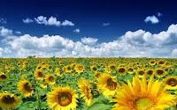 Poezii despre vara cu expresii frumoase pentru copii