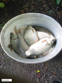 Рыбалка на пробку. Секреты ловли