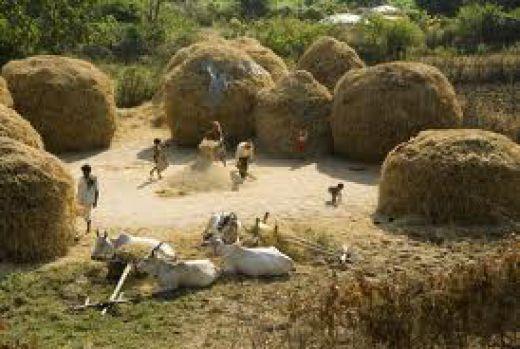 Village Life Style Indian Village Life Image