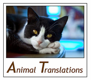 An Animal Translations Blog