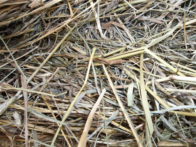 White House Farms: 4X5 Mixed Grass Fescue Hay In The Barn!