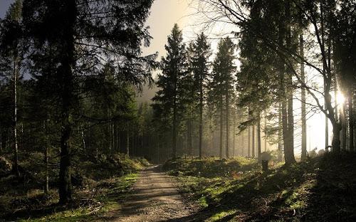 Gambar-Gambar Hutan Tropis Terbaru
