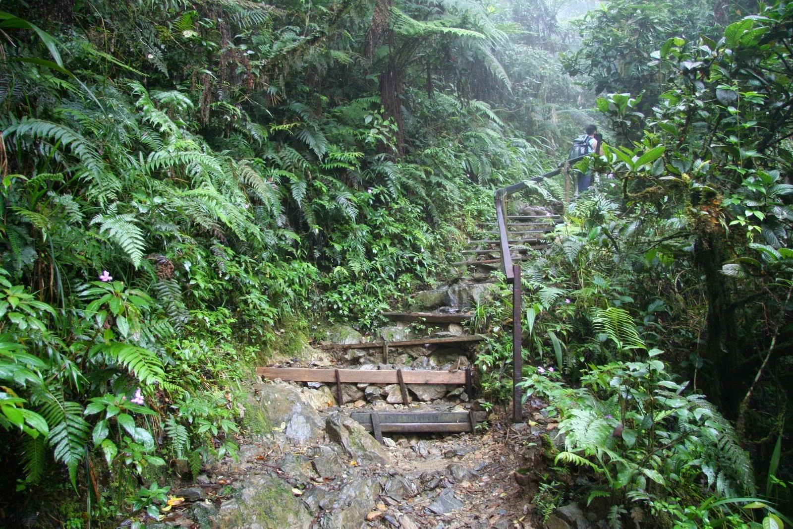 Timpohon Trail, Mount Kinabalu Climb