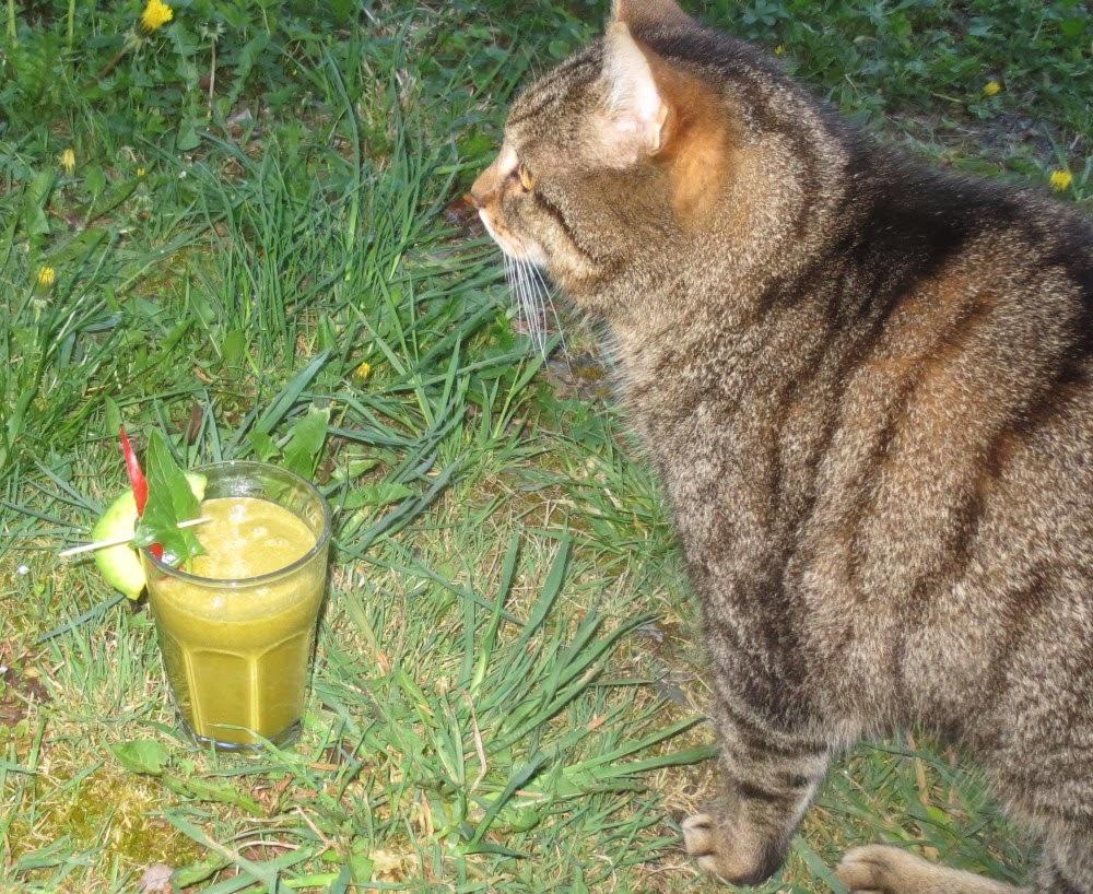 Avocado-Gemüse-Shake