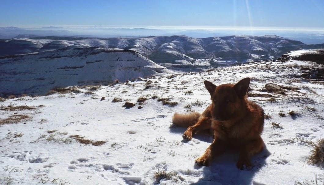 Sherpa-en-Castro-Valnera