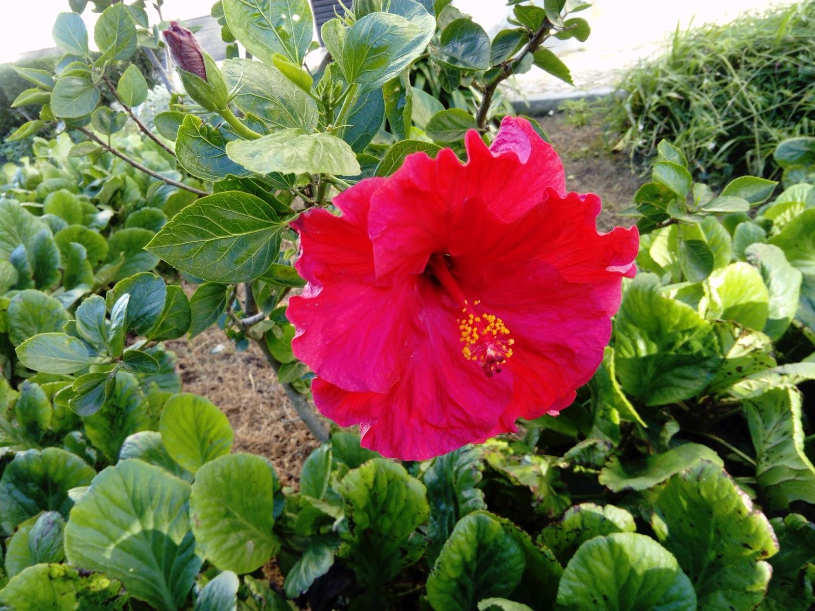 Flor de outono graciosa, bela e terna