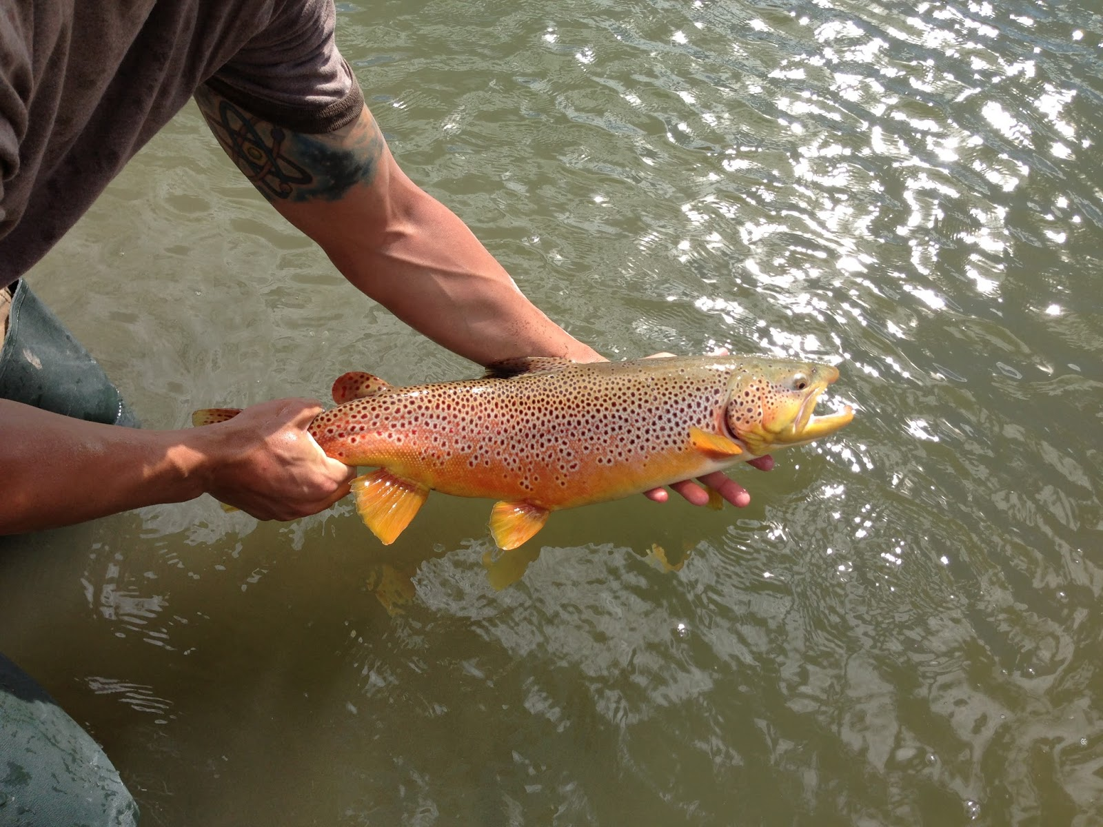 Dunc 39 s fishing adventures the good bad and the ugly for Bobber fishing for trout