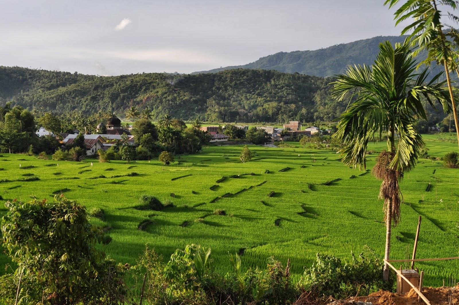 Siapa Sebenarnya Pencipta Lagu Aceh Tanoh Lon Sayang