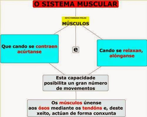 http://luisamariaarias.files.wordpress.com/2012/01/o-sistema-muscular.jpg