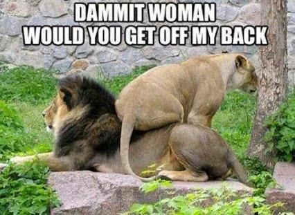Leona sobre león