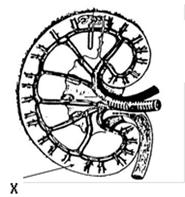 soal biologi sistem ekskresi (1) ~ MATERI DAN SOAL IPA ...