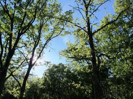 Dehesa de la Golondrina (Navacerrada) IMG_4115