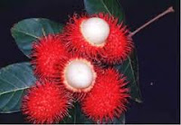 Rambutan Can Improve Male Sperm Quality