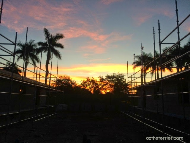 Oz the Terrier | Florida Sunrise over construction site