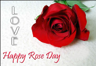 rose day wallpapers photos