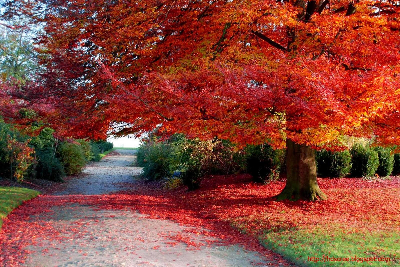 hd natural image beautiful - photo #27