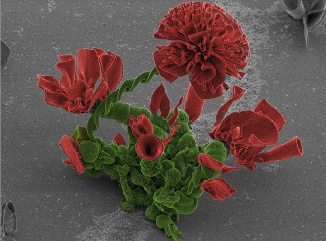 Bunga-bunga Nano yang ditanam di Makmal