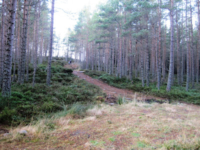 Deeside walks: near the top of Pannanich, Ballater
