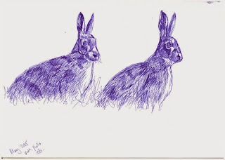 Hare sketches in biro