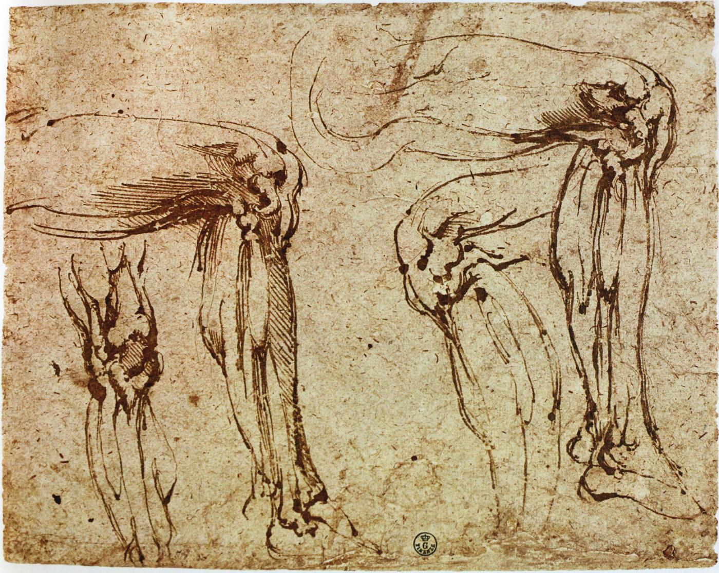 The Classical Pulse: Michelangelo: Leg Studies, Part 1